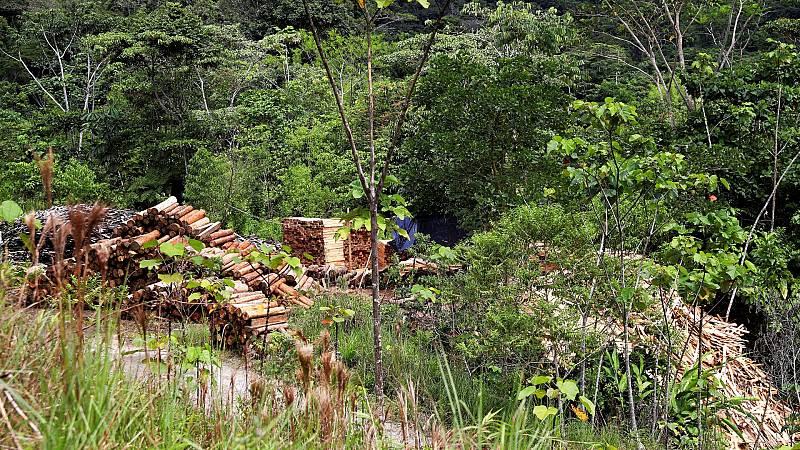 La FAO advierte de que la deforestación no se ralentiza al ritmo suficiente para salvar el planeta