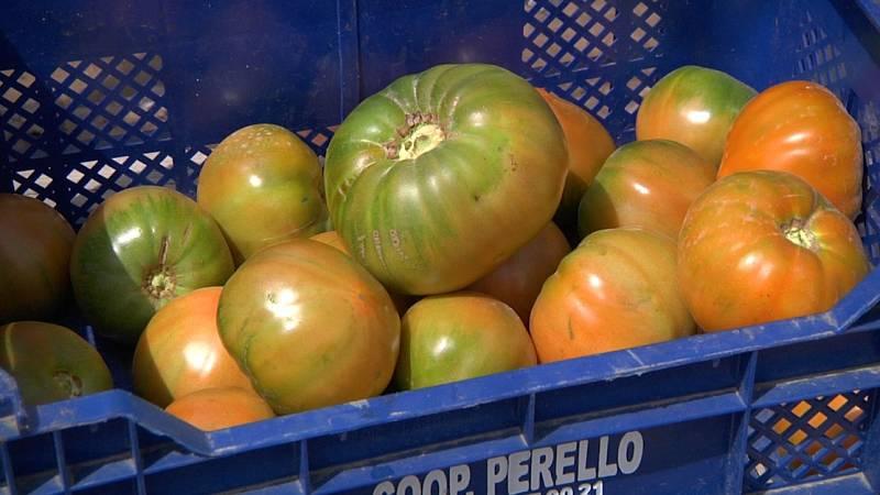 Aquí la Tierra - ¡El tomate de El Perelló se cultiva en arena de playa!