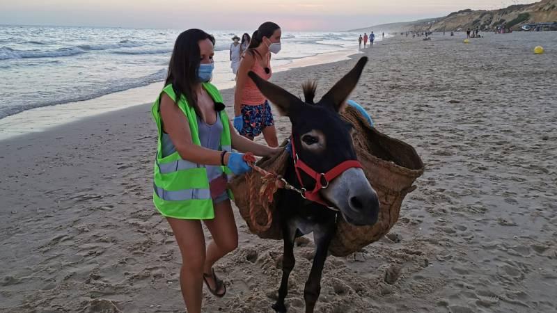 Aquí la Tierra - Los burros limpiacostas de la playa de Matalascañas