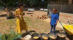 Aquí la Tierra - Gallinas muy bien alimentadas en Carrascosa de Haro