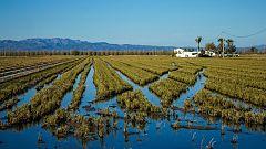 Los agricultores del Delta del Ebro inician un proyecto para cultivar de manera más ecológica