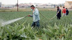 Sanidad y Agricultura presentan a las Comunidades Autónomas una guía de recomendaciones  para prevenir contagios entre los temporeros