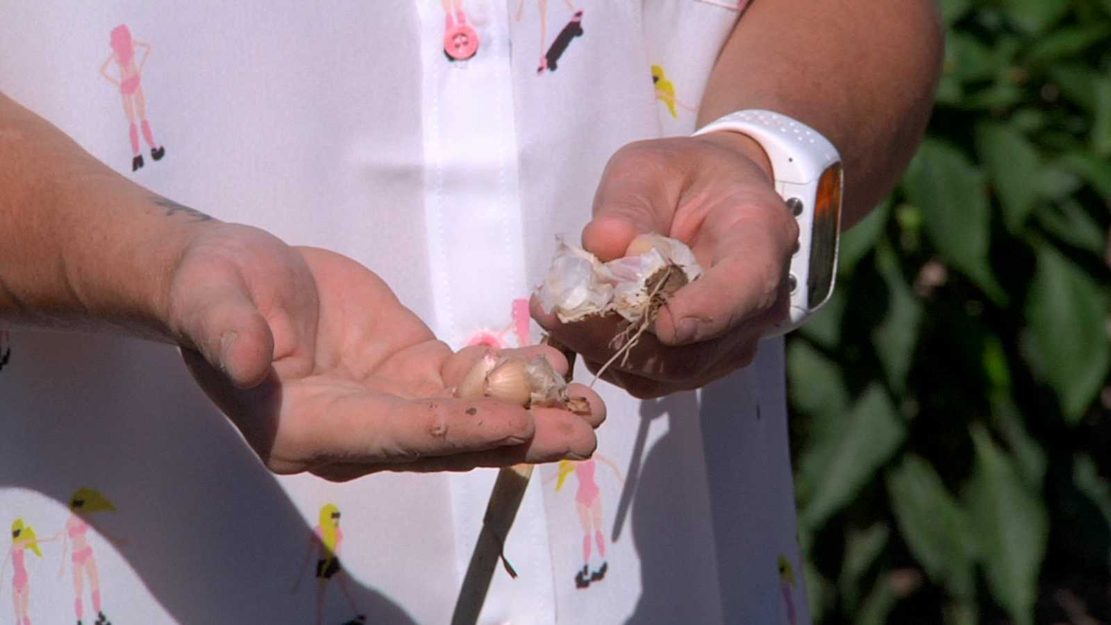 Receta con el ajo típico de Chinchón: Tartar de gambas con crema de ajo fino y caviar
