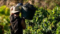 Viajan a Francia los primeros temporeros españoles para la vendimia