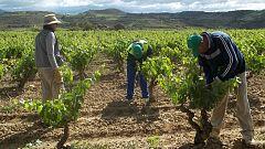 La muerte de un temporero en Lorca, tras sufrir un golpe de calor, reabre la polémica sobre las condiciones laborales de estos trabajadores