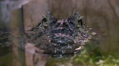 Aquí la Tierra - Conocemos de cerca a uno de los animales más peligrosos: ¡el cocodrilo!