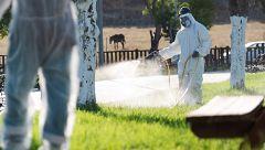 Coria del Río fumiga parques y jardines para frenar el brote de virus del Nilo