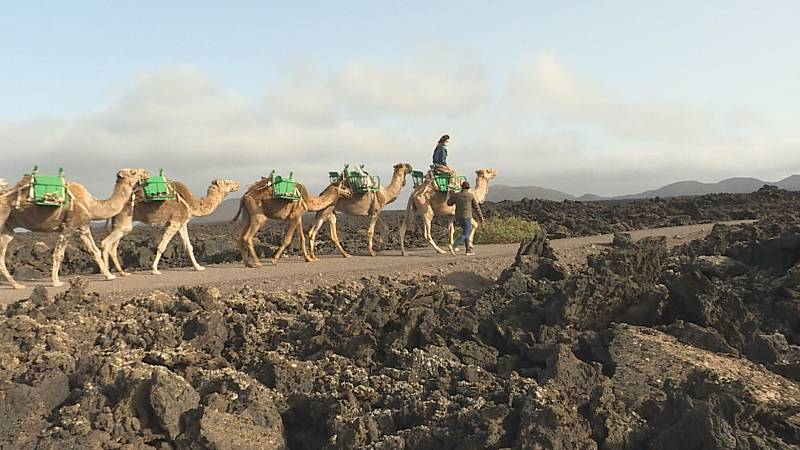 Un paseo a camello, un clásico de Lanzarote