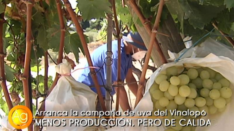Agrosfera - 05/09/20 - ver ahora
