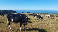 Aquí La Tierra - Las vacas y el mar