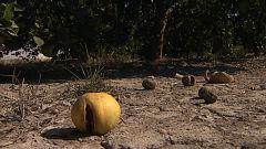 Agrosfera - 12/09/20