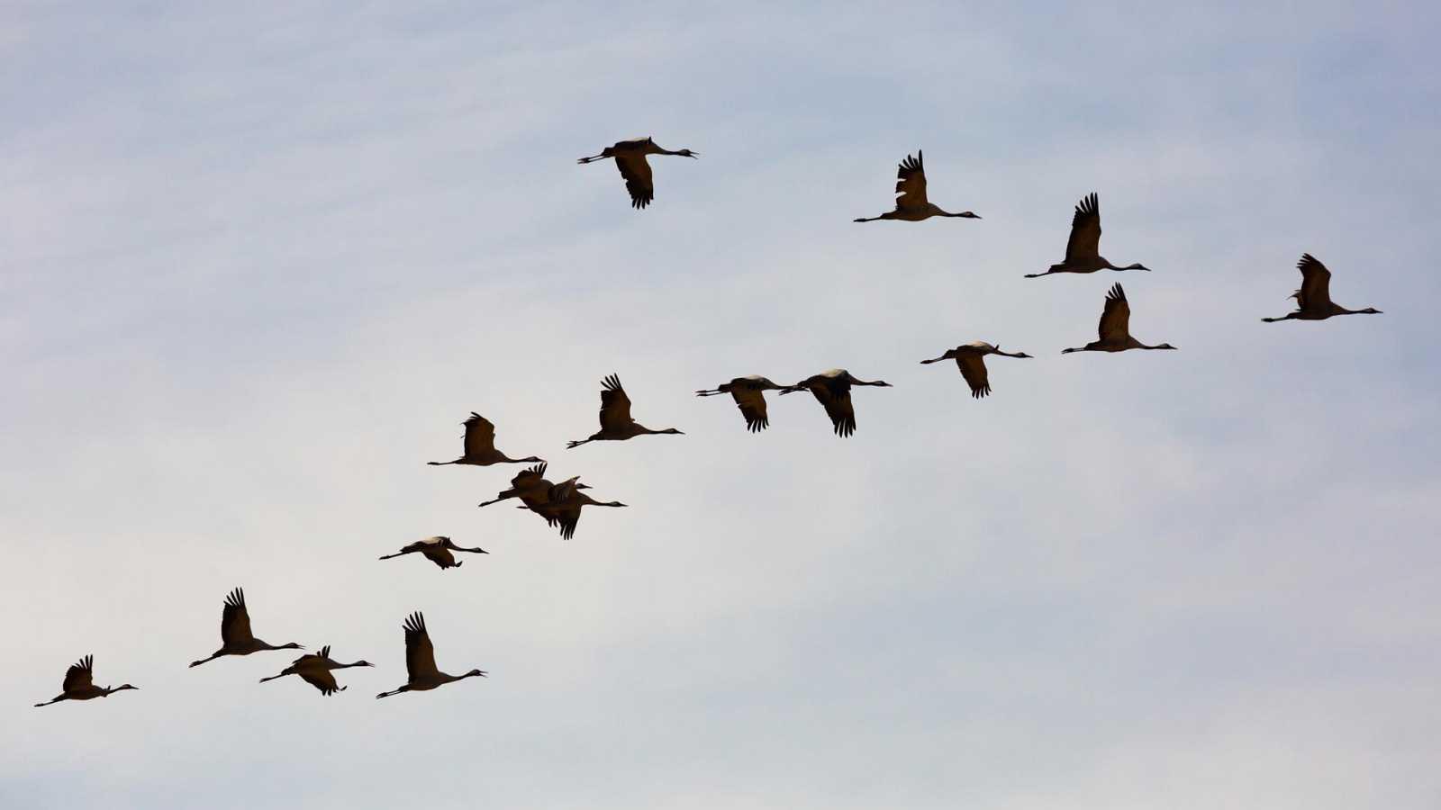 El hombre y la Tierra (Fauna ibérica) - Aves viajeras - ver ahora