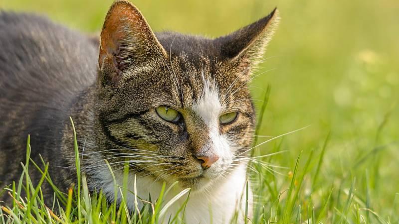 Los gatos abandonados, un problema para el Parque Nacional de Garajonay