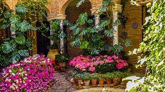 España Directo - Los patios de Córdoba se visten de gala