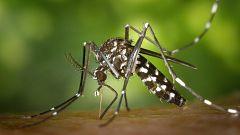 España Directo - Desinfección contra el mosquito que trasmite la fiebre del Nilo