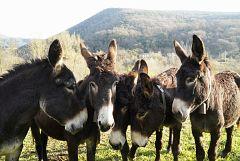 Aquí la Tierra - ¡Al rescate del burro!