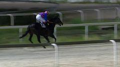 Hípica - Circuito nacional de carrera de caballos desde el Hipódromo de La Zarzuela (Madrid)