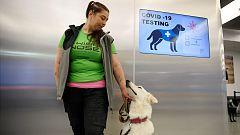 Perros rastreadores: la nueva medida del aeropuerto de Helsinki para detectar la COVID-19