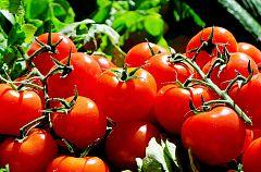 ¡El tomate!: Un alimento con grandes posibilidades