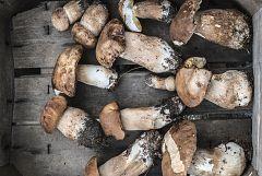 Aquí la Tierra - De excursión al monte de Cantabria a cocinar setas