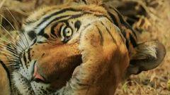 Las fotos más divertidas de animales finalistas de los Comedy Wildlife Photography Awards