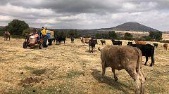 Aquí la Tierra - ¿De qué se alimentan las vacas en invierno?