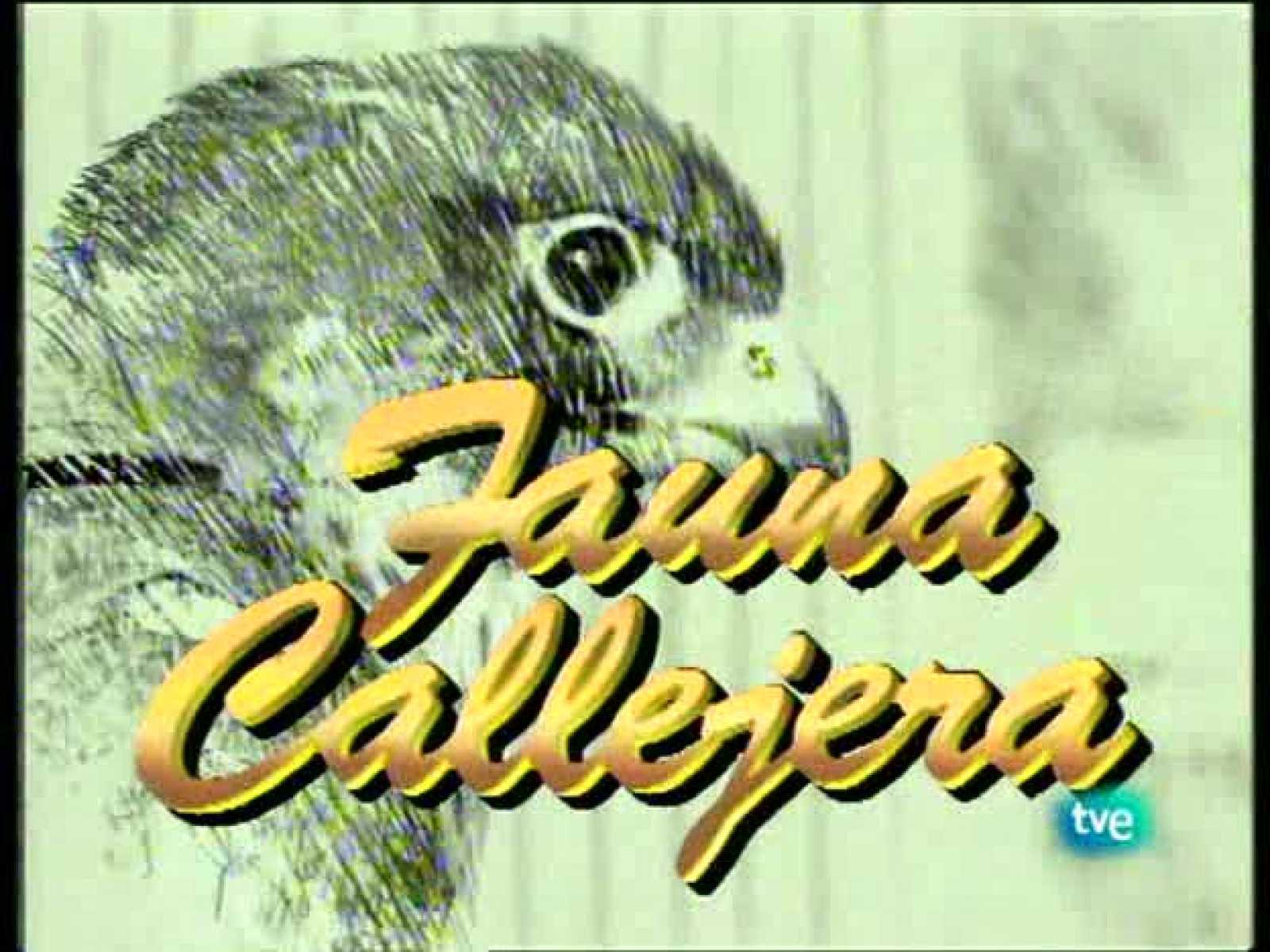 Fauna callejera - Edificios con solera I - Ver ahora