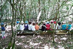 Para Todos La 2-Las Escuelas Bosque, aprender en la naturaleza