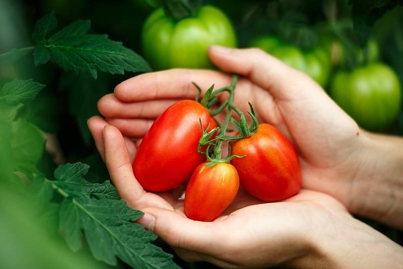 Aquí la Tierra - Tomates pimiento, tomates diamante... ¡y más de 890 sabores diferentes!