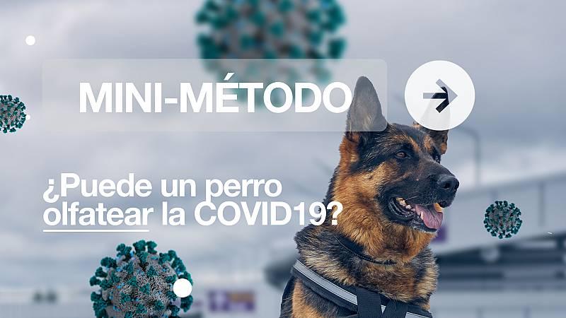 ¿Puede un perro olfatear la COVID-19?