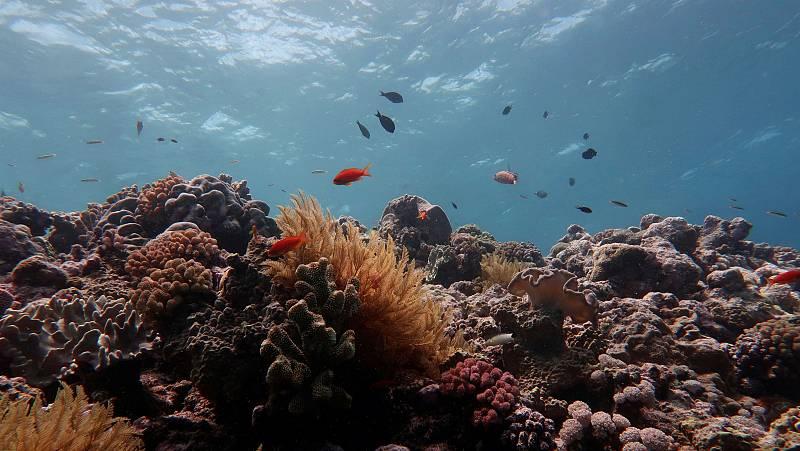 La Gran Barrera de Coral no escapa del cambio climático