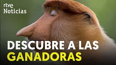 El premio Wildlife Photographer of the Year muestra algunos de los lugares más salvajes del mundo