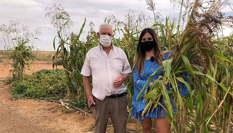 Aquí la Tierra - El mijo, la escoba de Castilla-La Mancha