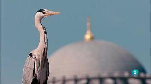 Istanbul salvatge