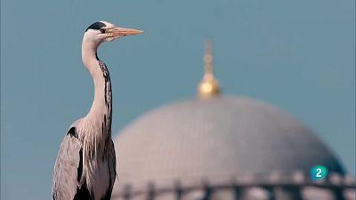 Grans documentals - Istanbul salvatge