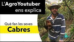 La Metro - Pagès youtuber i control de mosquits
