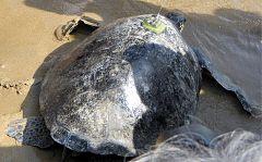 Un desastre medioambiental causa la muerte de miles de animales marinos en Rusia