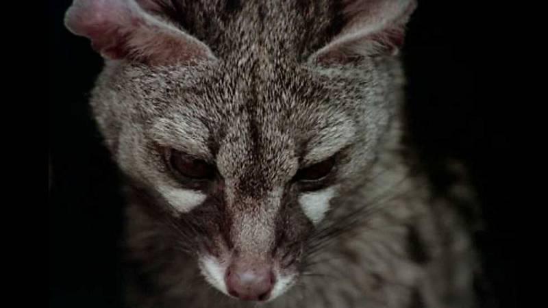 El hombre y la Tierra (Fauna ibérica) - La bella matadora - ver ahora