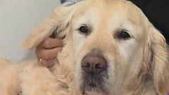 Zenit, el perro que echa de menos la UCI