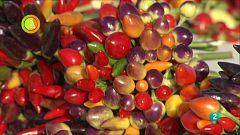 Agrosfera - Laboratorio de ideas - Campaña de pimientos ornamentales