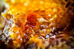 Aquí la Tierra - Miel de castaña gallega: nos vestimos de apicultores