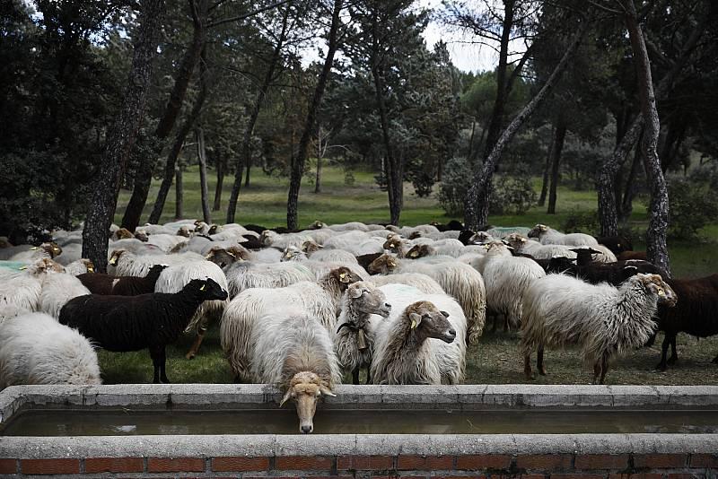 Aquí la Tierra - La rubia y la morena autóctonas de Madrid, ¿las conoces?