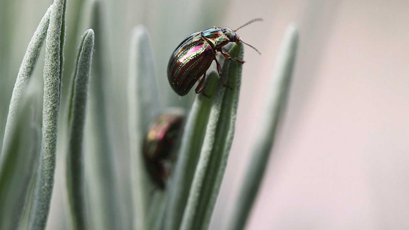 Aquí la Tierra - San Lorenzo de El Escorial, visitamos esta tierra de insectos
