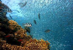 Para Todos La 2- Los peces y los océanos.