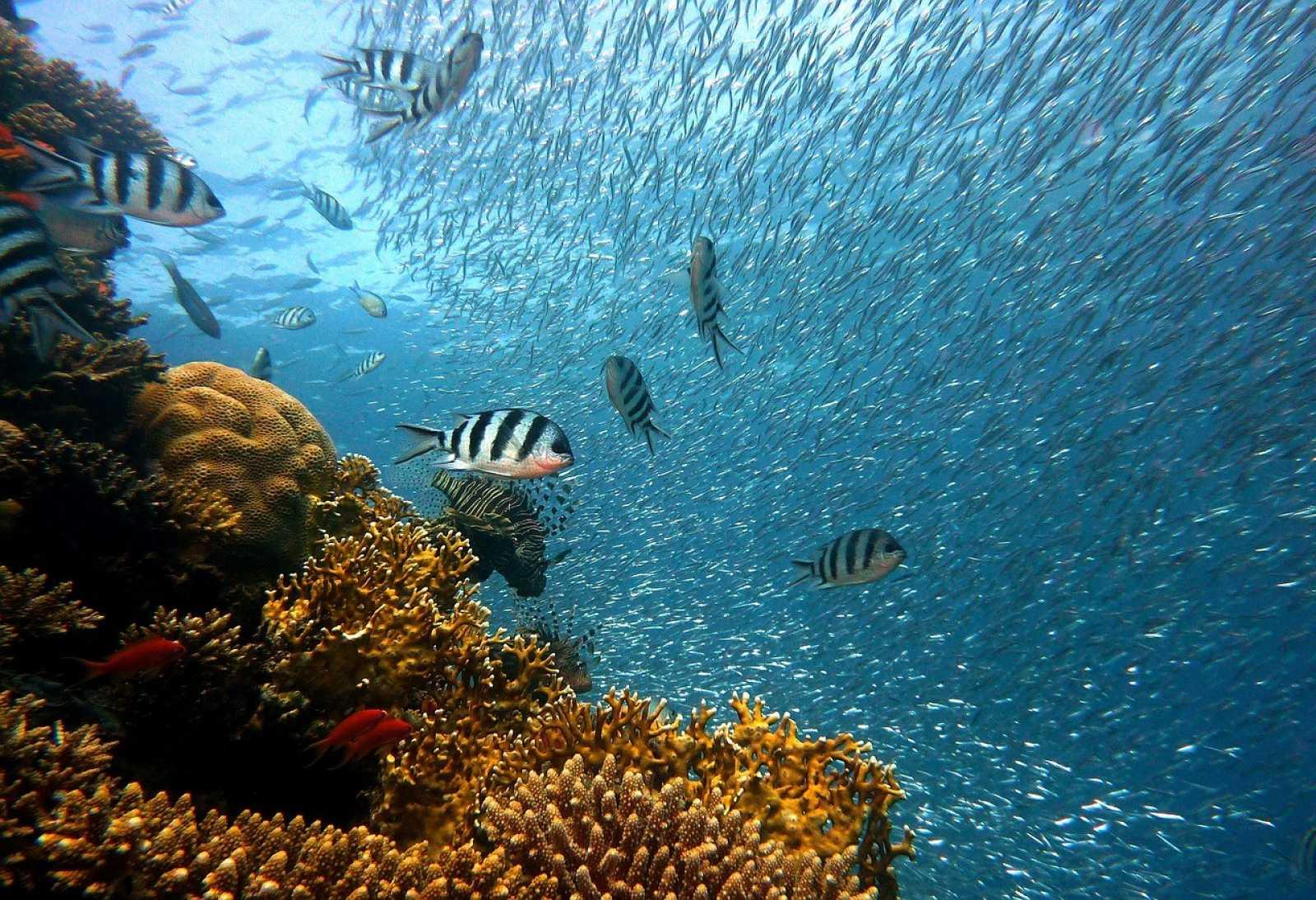 Cuidar la fauna marina es cuidar el planeta