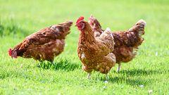 España Directo - Del gallinero a la tienda