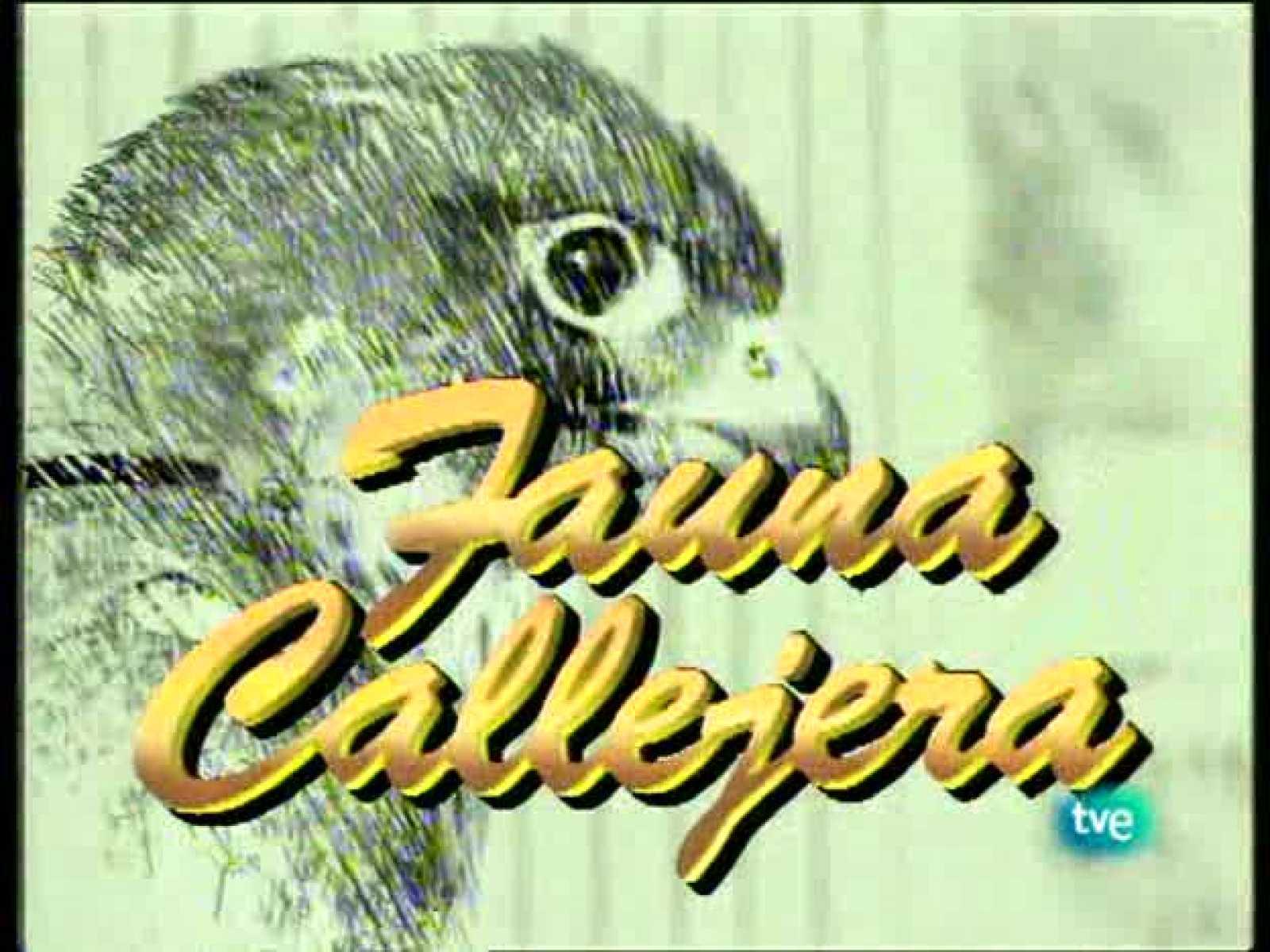 Fauna callejera - Edificios con solera II - Ver ahora