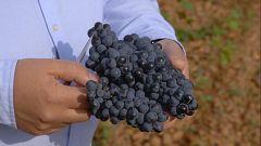 Aquí la Tierra - Conocemos la uva prieto picudo, típica de León