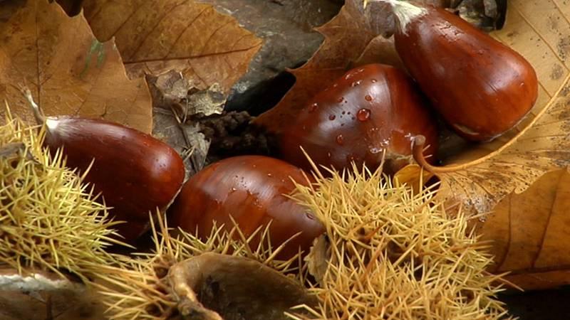 Agrosfera - 14/11/20 - ver ahora
