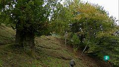 Agrosfera - Turismo rural - Palacios del Sil